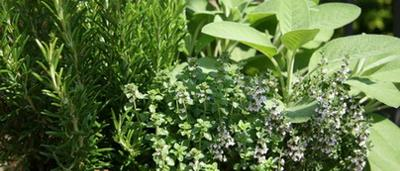 Healthy herbs & spices are a great addition to any recipe